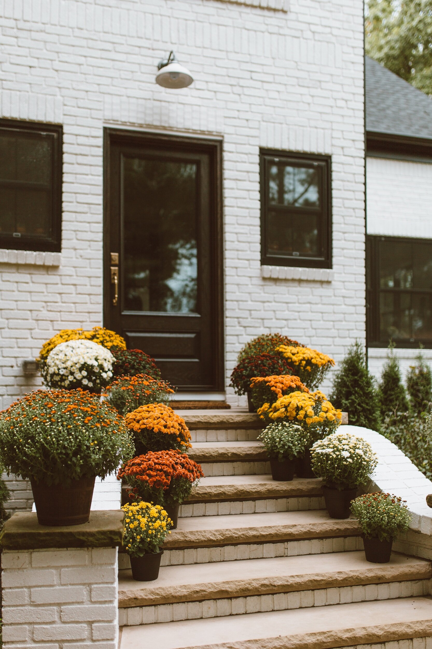 forthehome-how-to-care-for-fall-mums-00.jpeg