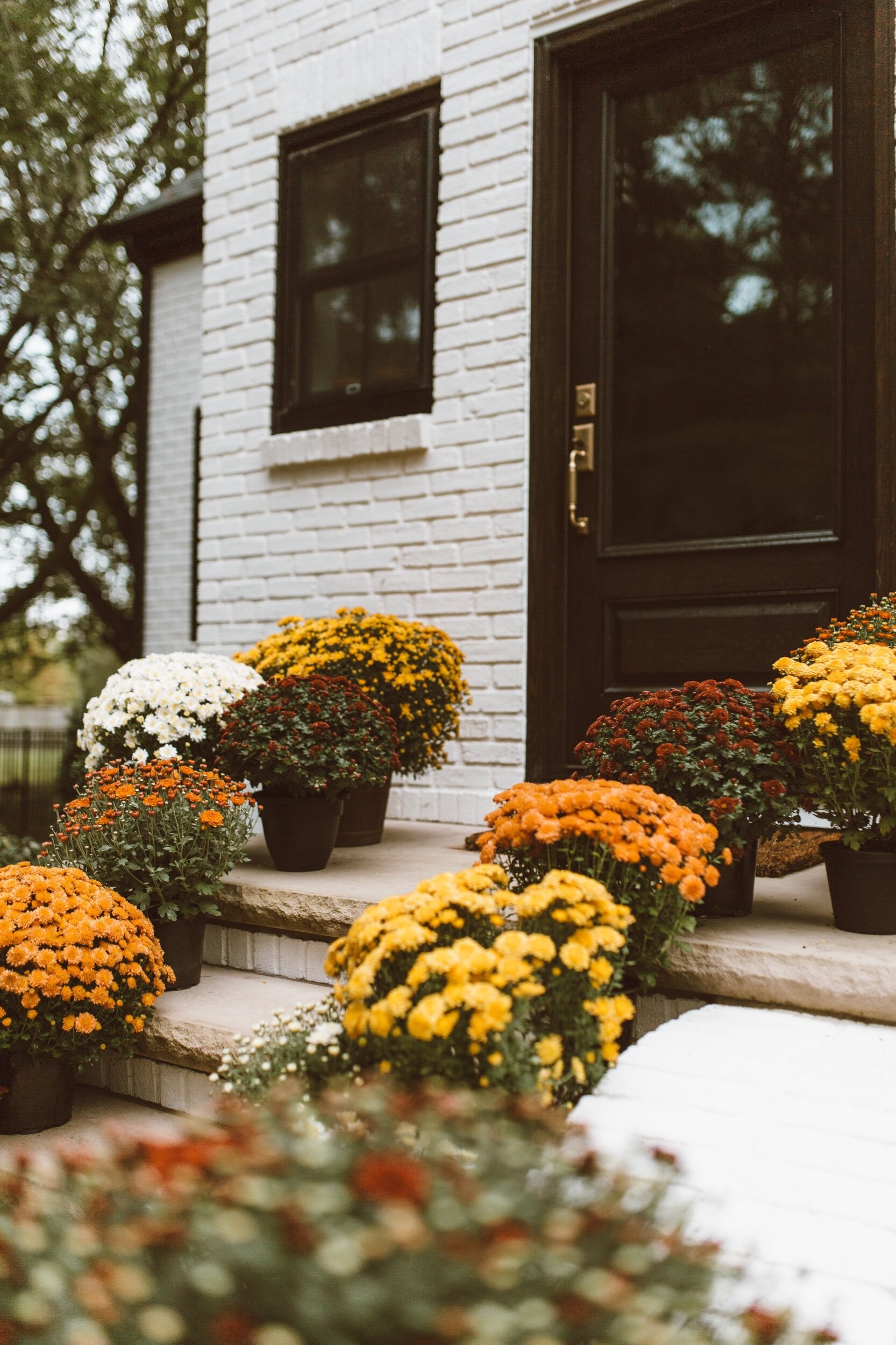 forthehome-how-to-care-for-fall-mums-02.jpeg