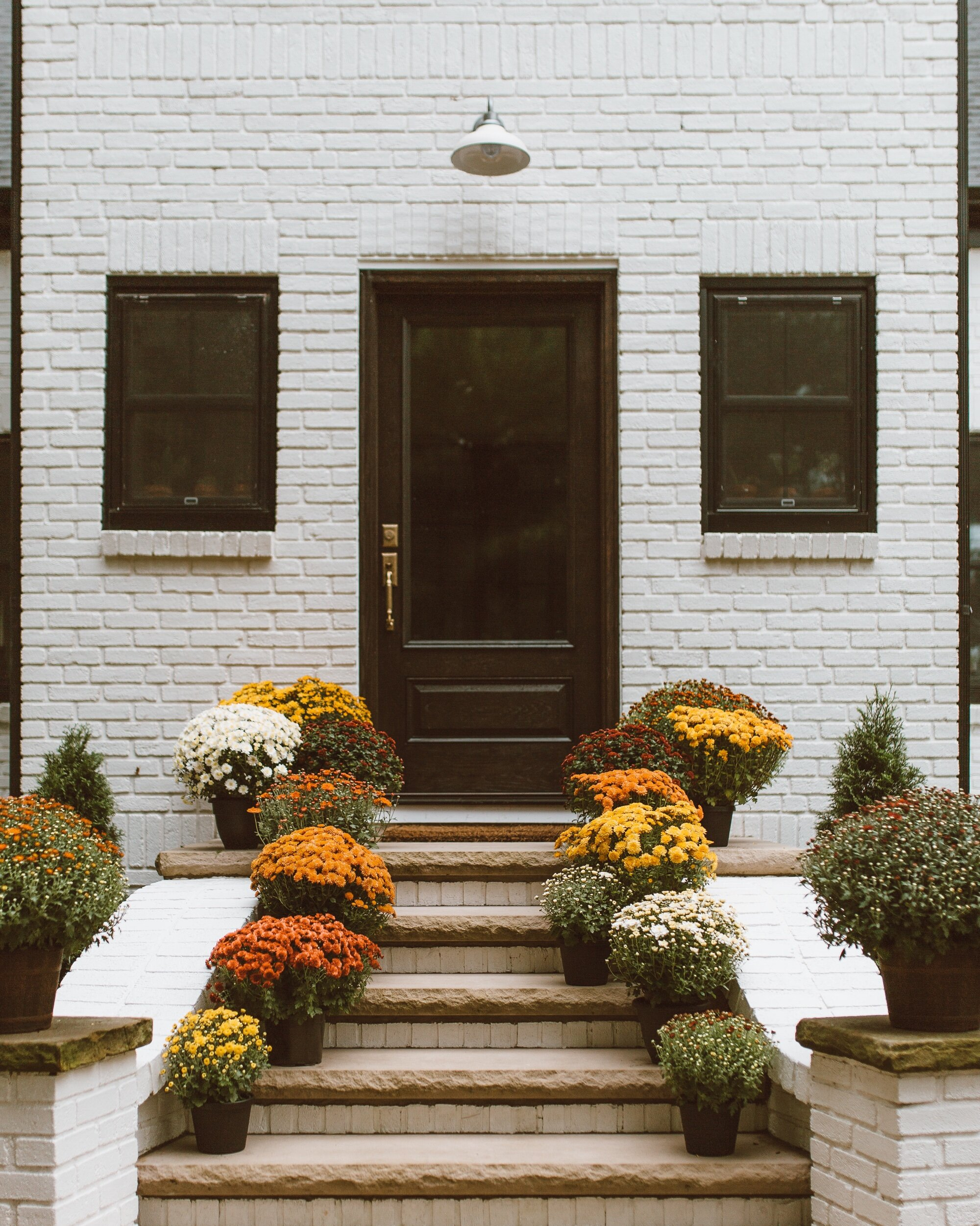 forthehome-how-to-care-for-fall-mums-06.jpeg