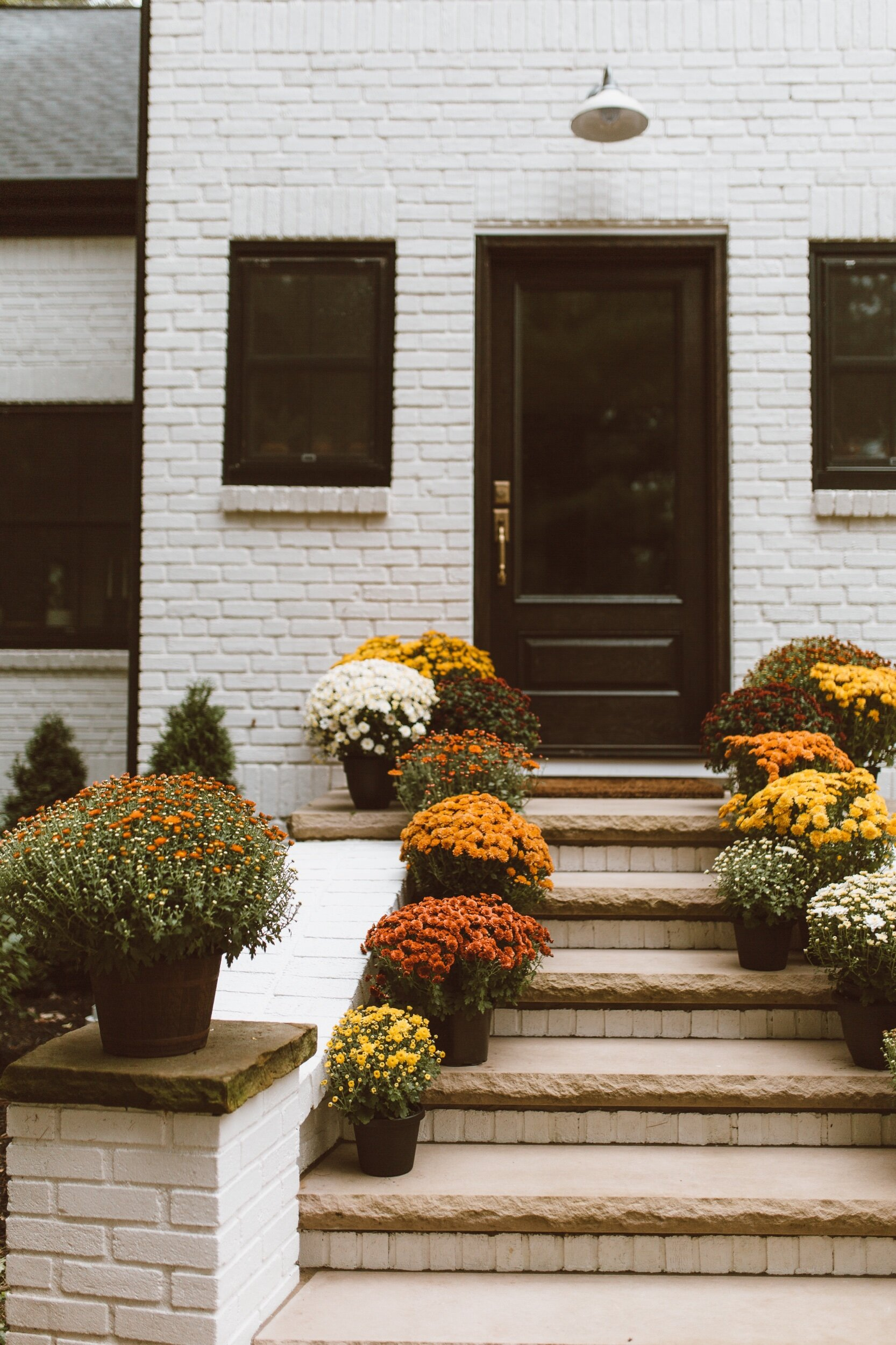 forthehome-how-to-care-for-fall-mums-04.jpeg