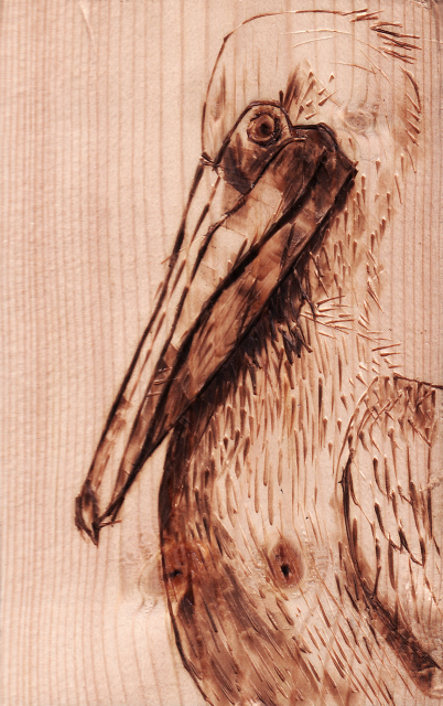 Pelican Woodburn by June Jewell