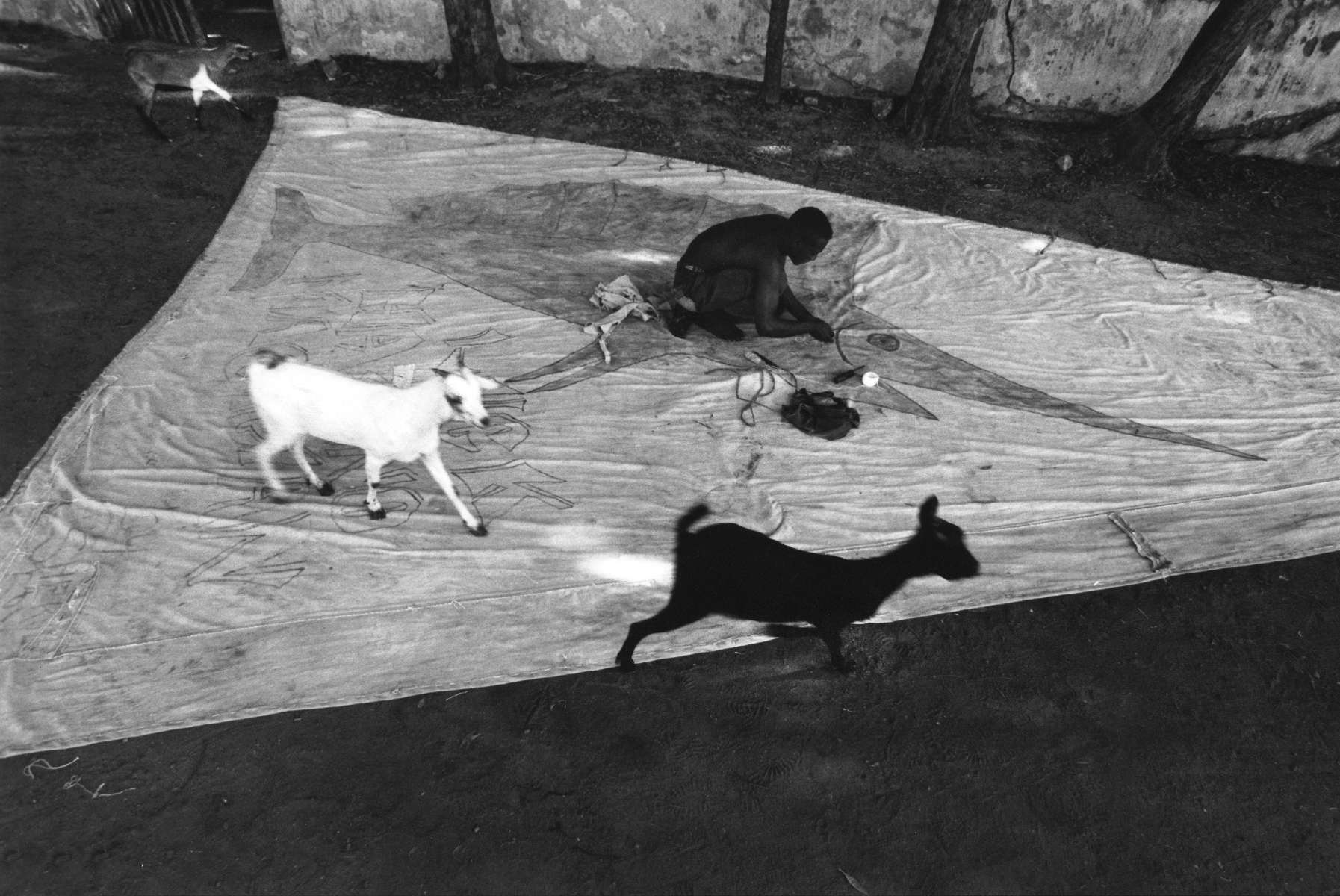 """Goats And Sailmaker"" Mombasa. 1999"