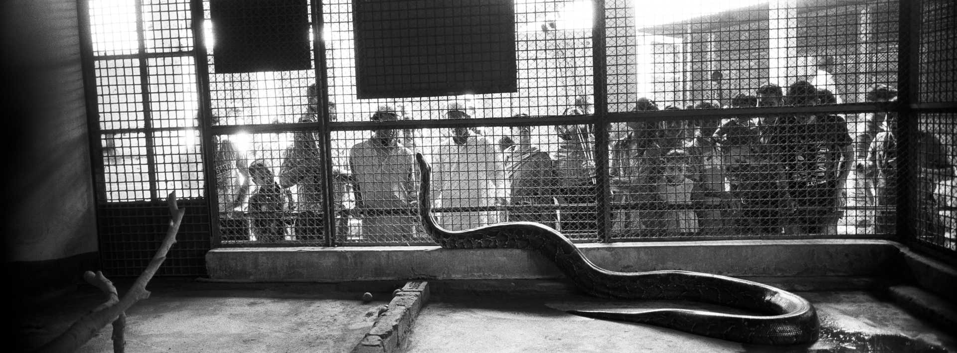 Zoo,Dhaka, Bangladesh.