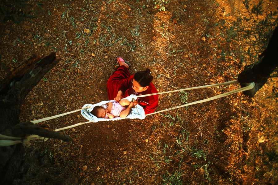 """""""Olive Grove"""" Gazastrip, Palestine. 1993"""