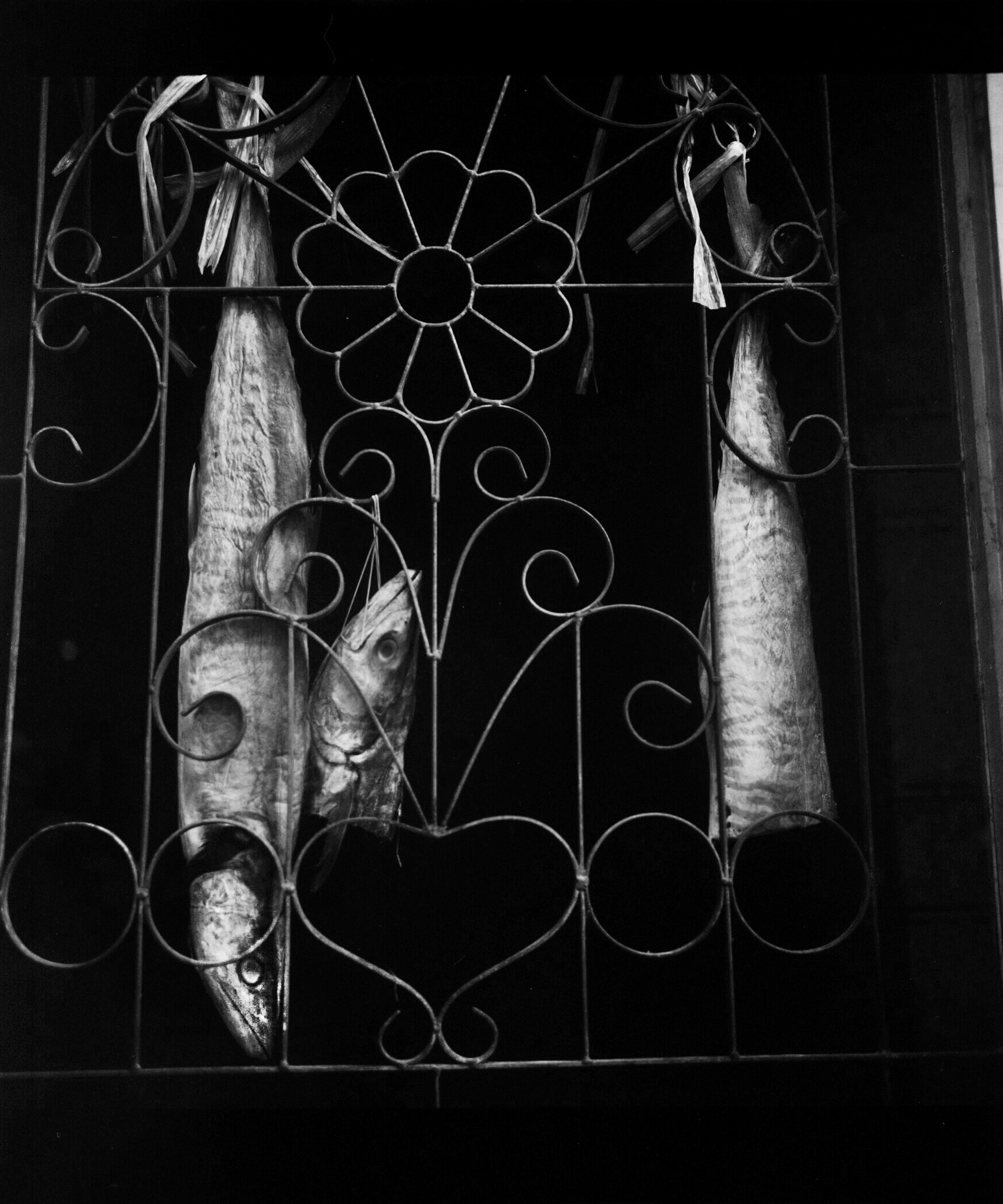 JackPicone_Fish-Window-Web-2.jpg