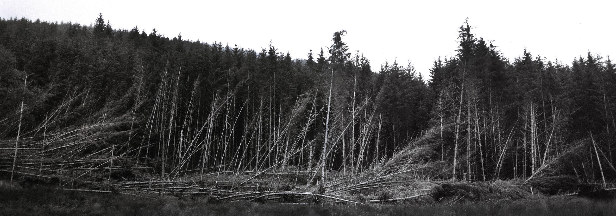 Fallen trees. Tayvallich, Scotland. 2017