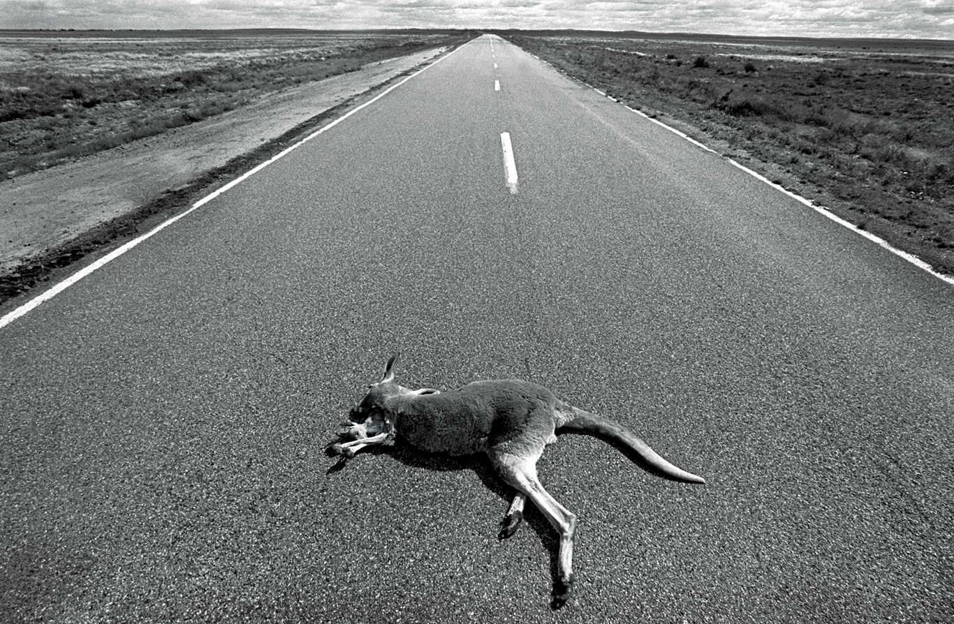 Dead On The Road