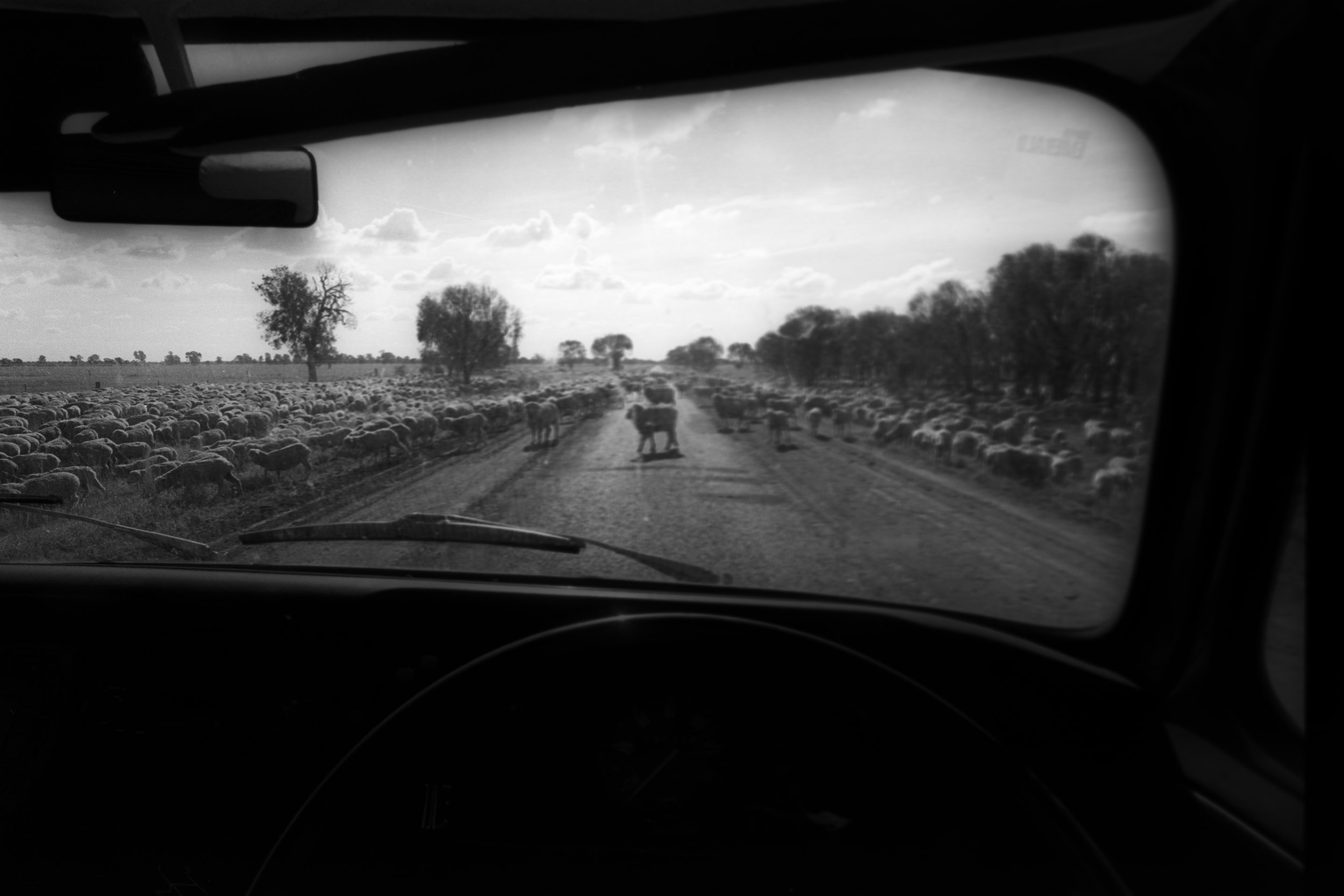 Colloquially know as the 'longest paddock'. During drought times in outback Australia, sheep are driven onto the verges of inland highways so they can feed on the remaing available grass. Outback NSW, Australia. 1995