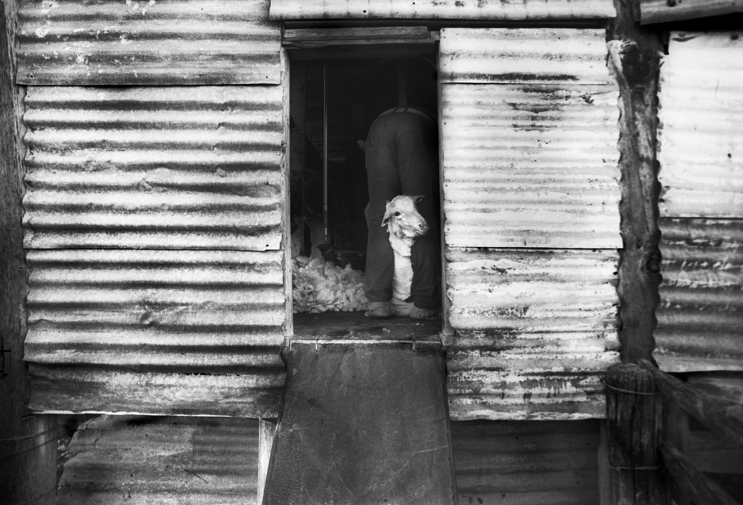 Washing before 'Smoko'(break) Outback QLD, Australia. 1997
