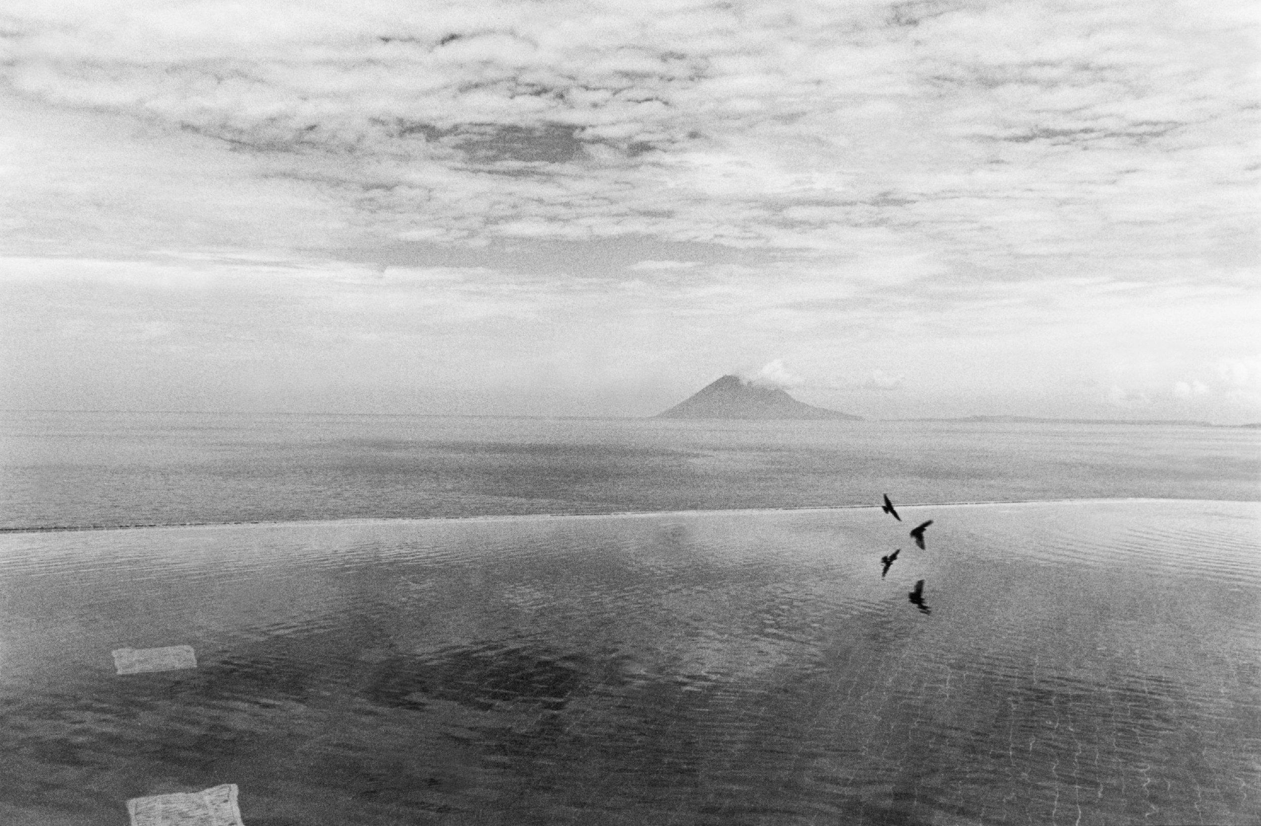 Swallows, Mandao Bay, Sulawesi. 2002