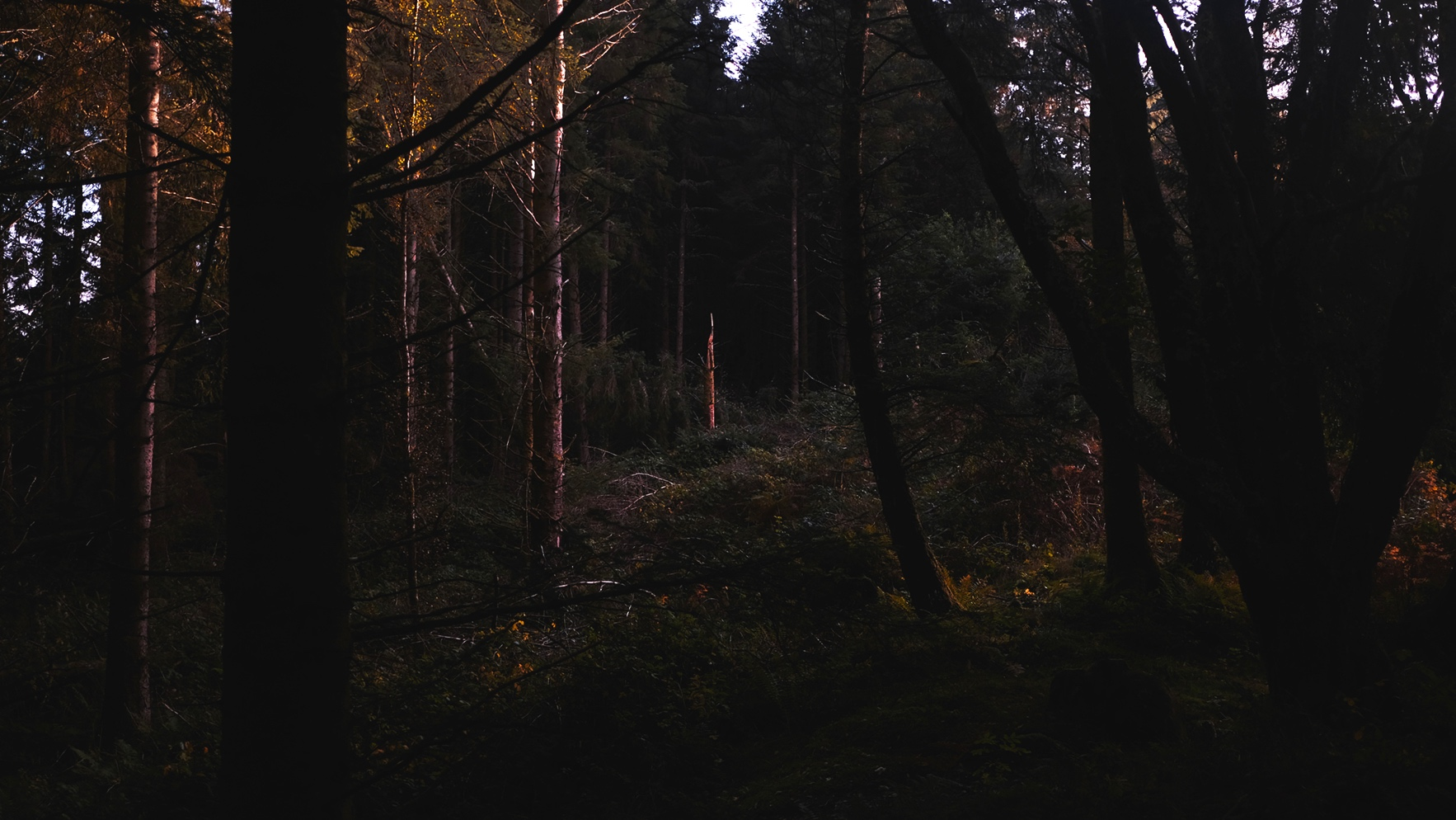 JackPicone_Trees-Tayvallich-Web-5.jpg