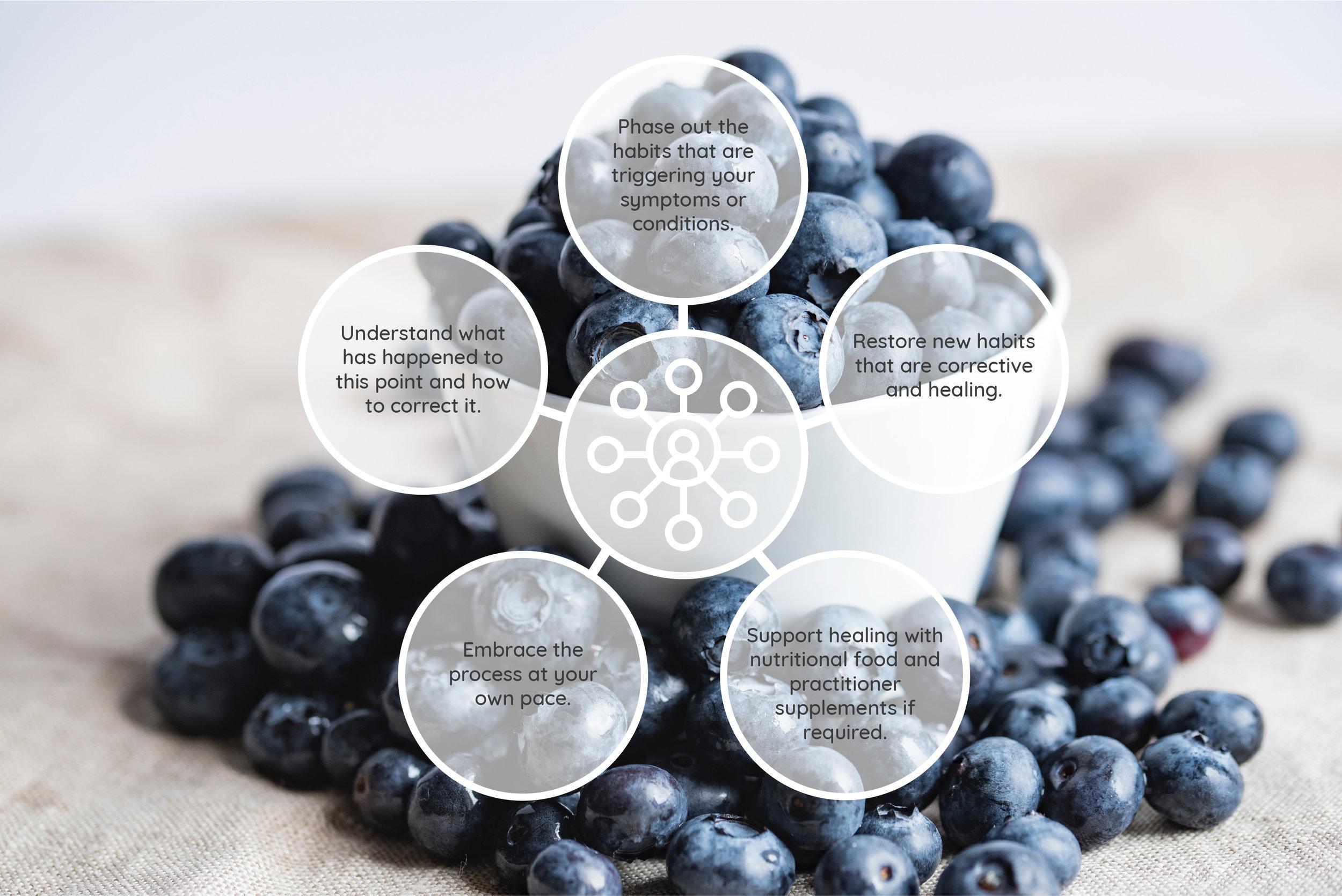 NutritionalModel_v2.jpg