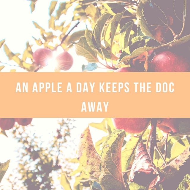 Apples are great source of fiber and some key nutrients like potassium , vitamin C and rich in polyphenols that act as powerful antioxidants. Apples also have pectin which is a prebiotic that feeds good bacteria in your colon keeping it happy. ⠀⠀⠀⠀⠀⠀⠀⠀⠀ ⠀⠀⠀⠀⠀⠀⠀⠀⠀ Do you love a good crispy apple?⠀⠀⠀⠀⠀⠀⠀⠀⠀ ⠀⠀⠀⠀⠀⠀⠀⠀⠀ ⠀⠀⠀⠀⠀⠀⠀⠀⠀ ⠀⠀⠀⠀⠀⠀⠀⠀⠀ ⠀⠀⠀⠀⠀⠀⠀⠀⠀ ⠀⠀⠀⠀⠀⠀⠀⠀⠀ ⠀⠀⠀⠀⠀⠀⠀⠀⠀ #appleaday #planoly #nutrition #foodispower #foodishealing #naomithenutritionist #holistichealth #functionalmedicinetesting #wholesometips #unley #ichoosesa #authenticnutrition #optimalnutrition #selfcare #iridology #wellbeing #mindbodysoul #healingfoods #eatmoregreens #eatrealfood #wholefoods #happyvibes #wholism