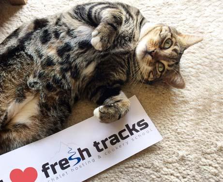 cat-loves-fresh-tracks.jpg