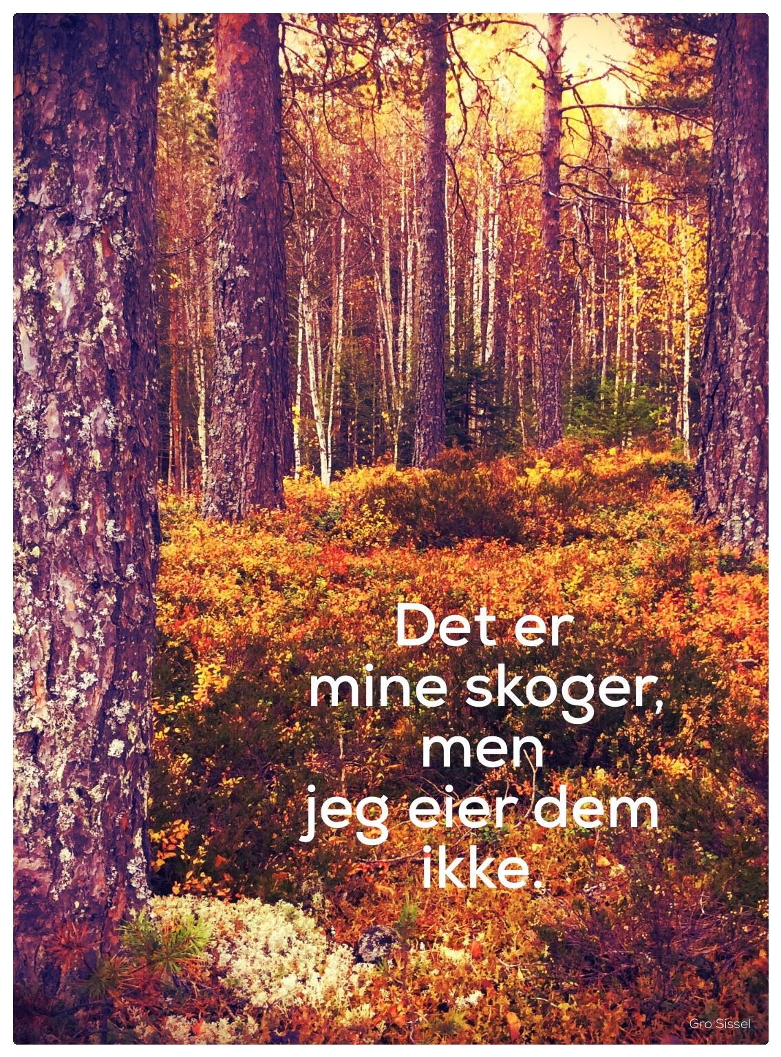 Eier ikke skogene.._.jpg