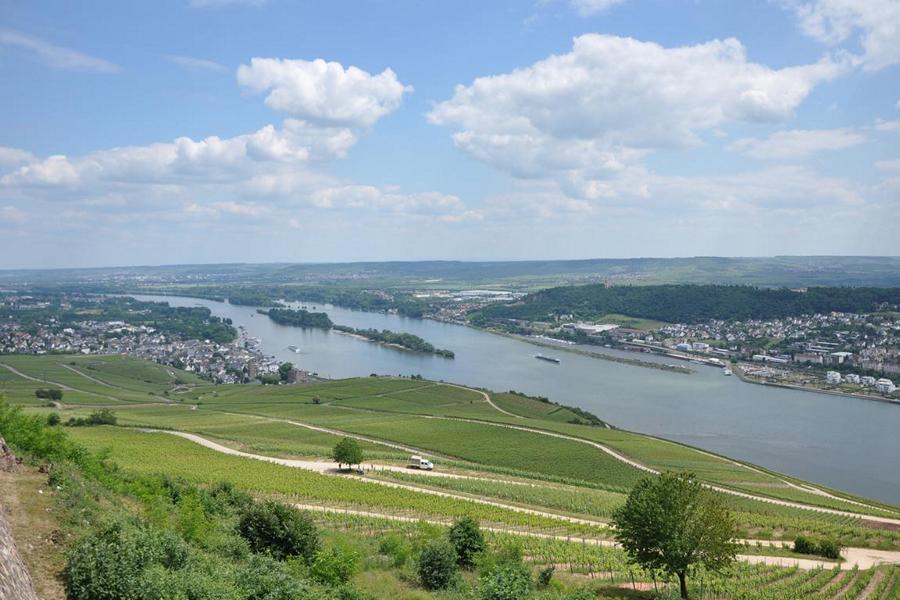 Rheingau2.JPG