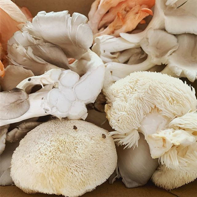 Been fighting off a virus for the last few days- along with half of Melbourne it sounds like! 🤒  I found this amazing collection of medicinal mushrooms at @melbournefarmersmarkets today- these should help boost my immune system along with plenty of garlic, ginger and fresh greens this weekend 💪 Extra excited to try the lion's mane mushroom (fluffy looking guy at the bottom), I've been having this each morning in a powdered form to help with brain function but this is the first time I've found it fresh 🍄