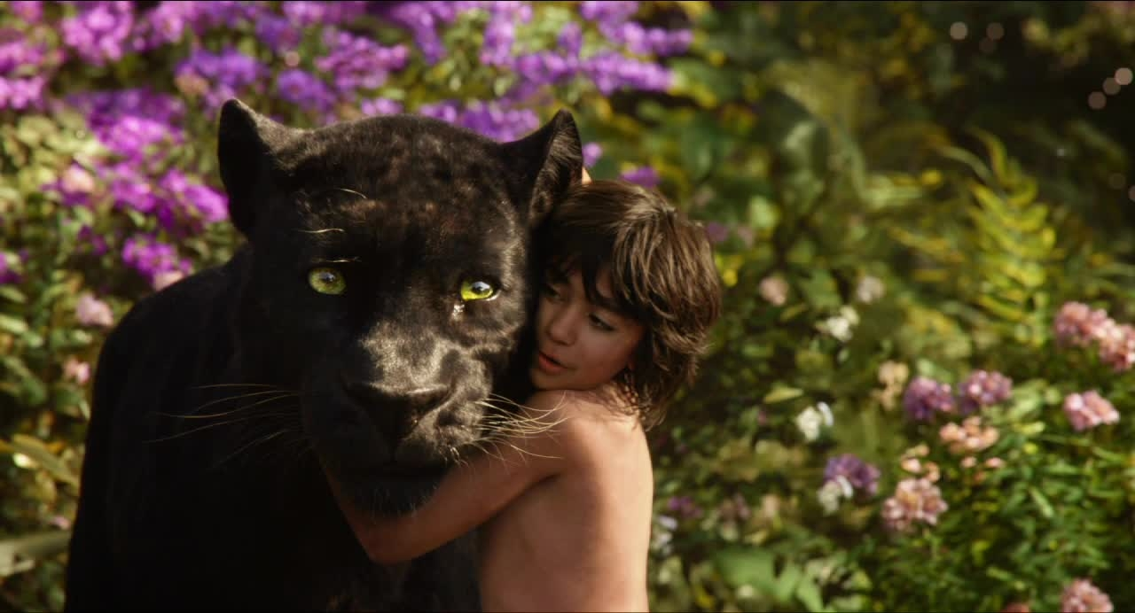 The Jungle Book (2016) - Amanda welcomes back Dan to discuss the 2016 remake of the Disney classic, The Jungle Book. Dan can't pick a favorite actress but has admits his celebrity crush is Emily Browning and Amanda suggests a new category for The Academy to use for the Oscars.