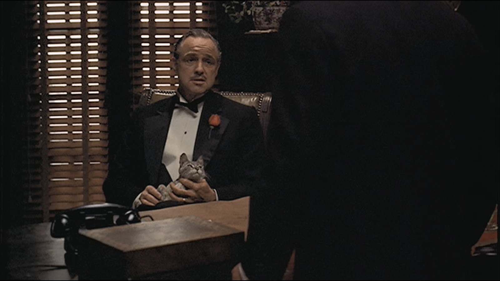Minute 5: The Godfather-That Don Cat - Minute five is all about the cat. How did the now iconic cat end up in the lap of Marlon Brando? How does it tie into the character of Don Corleone? And does it have a name? Amanda and Stephen tackle these questions and more.