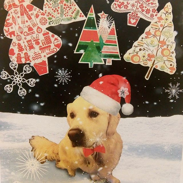 This is Waddington, he's our centre dog. Happy Christmas everyone #mentalhealth #dogs #santahat #durhamuk #christmas