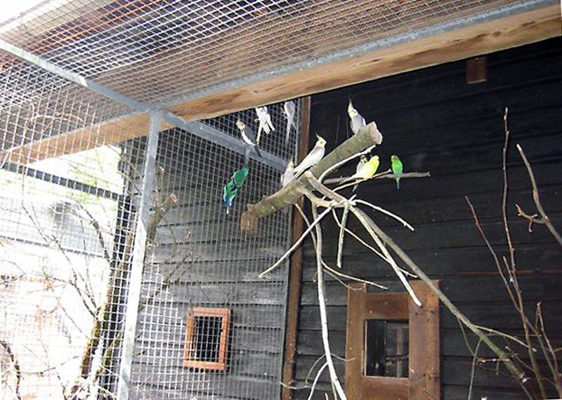 Freiflugvoliere für unsere Vögel