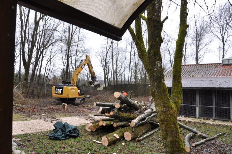 Bäume sind gefällt, Hundefreigehge abgebaut, es kann weiter gehen