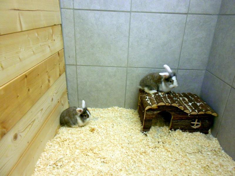 Kaninchen im neuen Nagerhaus