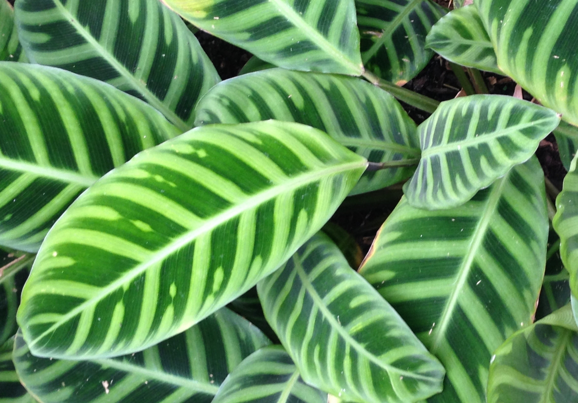 tropical-leaves.jpg