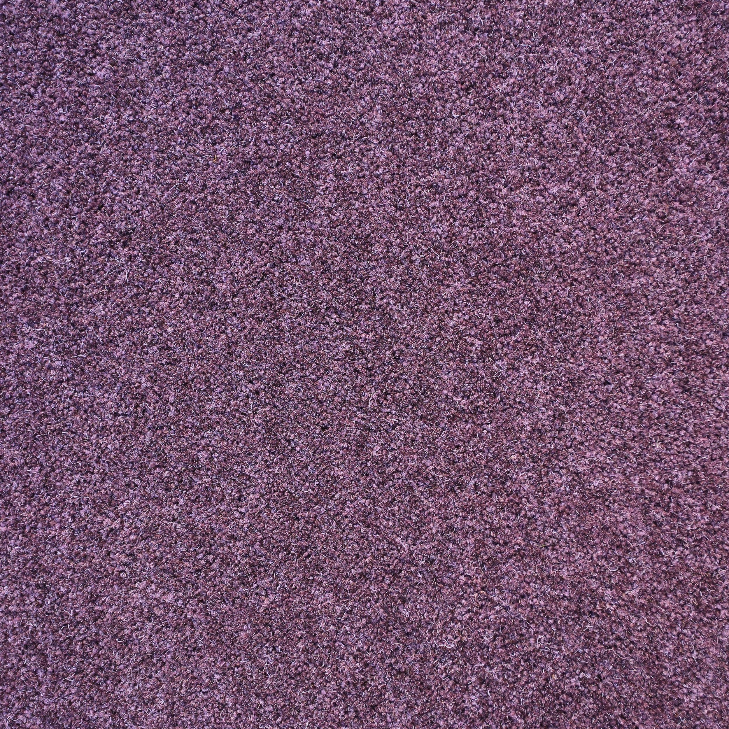 Herdwick Purple