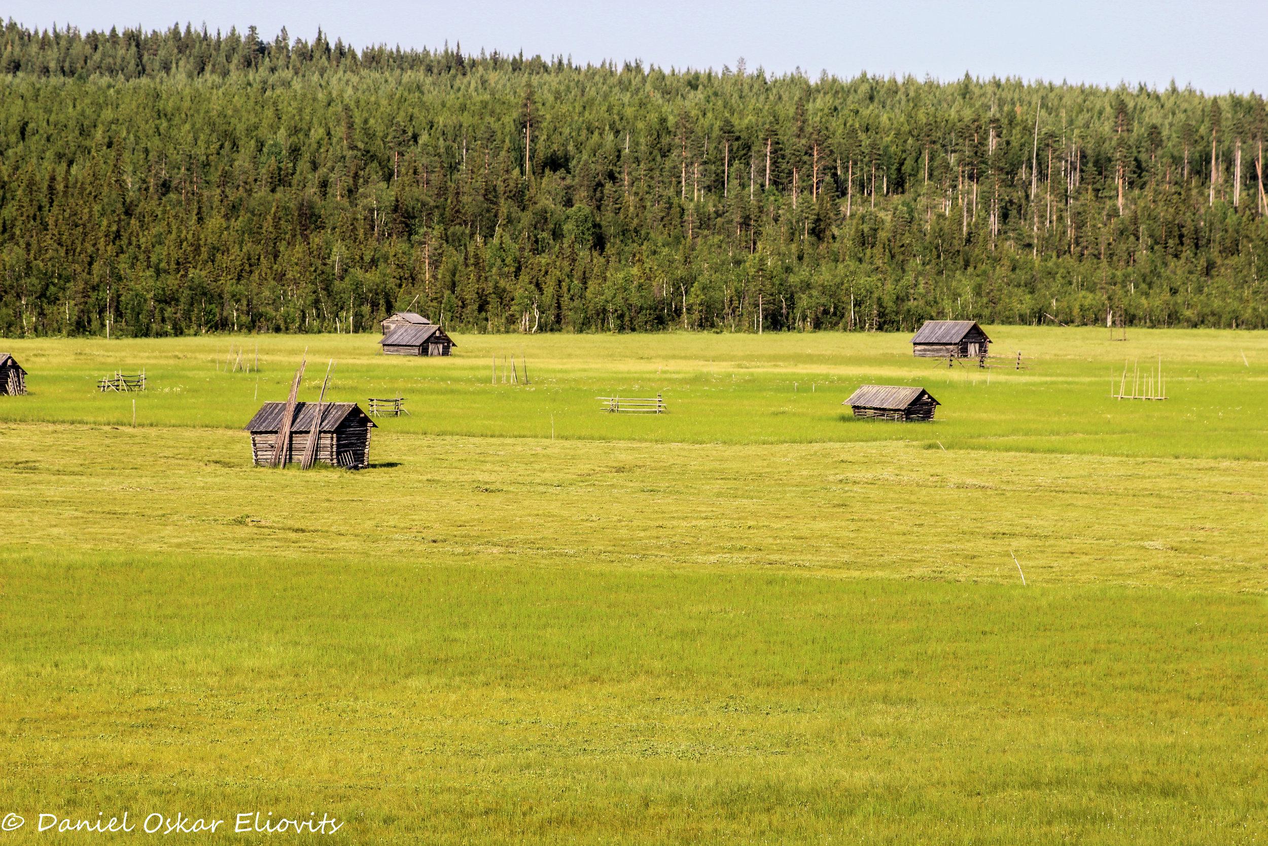 The bog soil named Vasikavuoma in nothern Sweden.