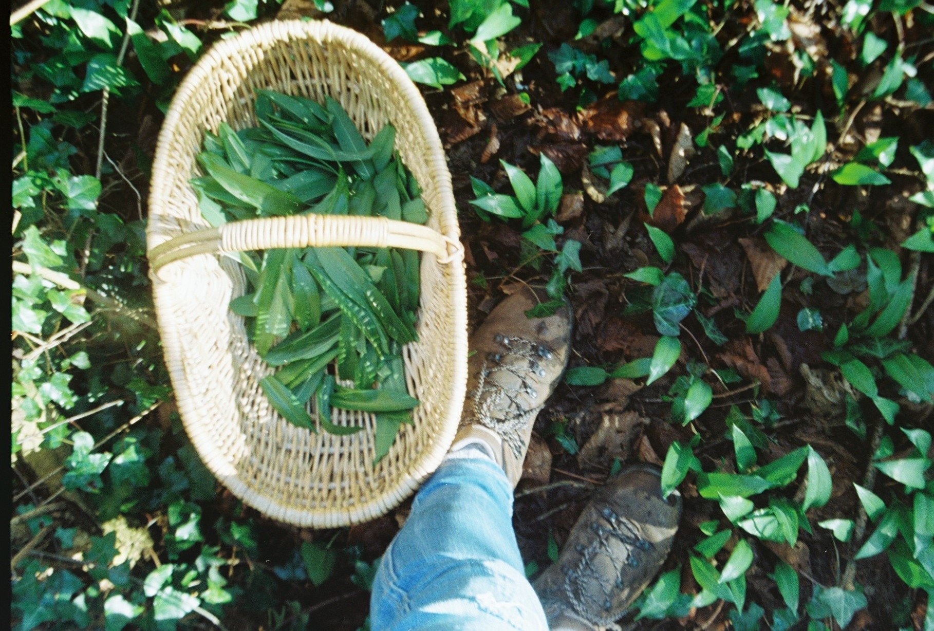 Make your own foraged wild garlic pesto | Recipes from The Foraged Life