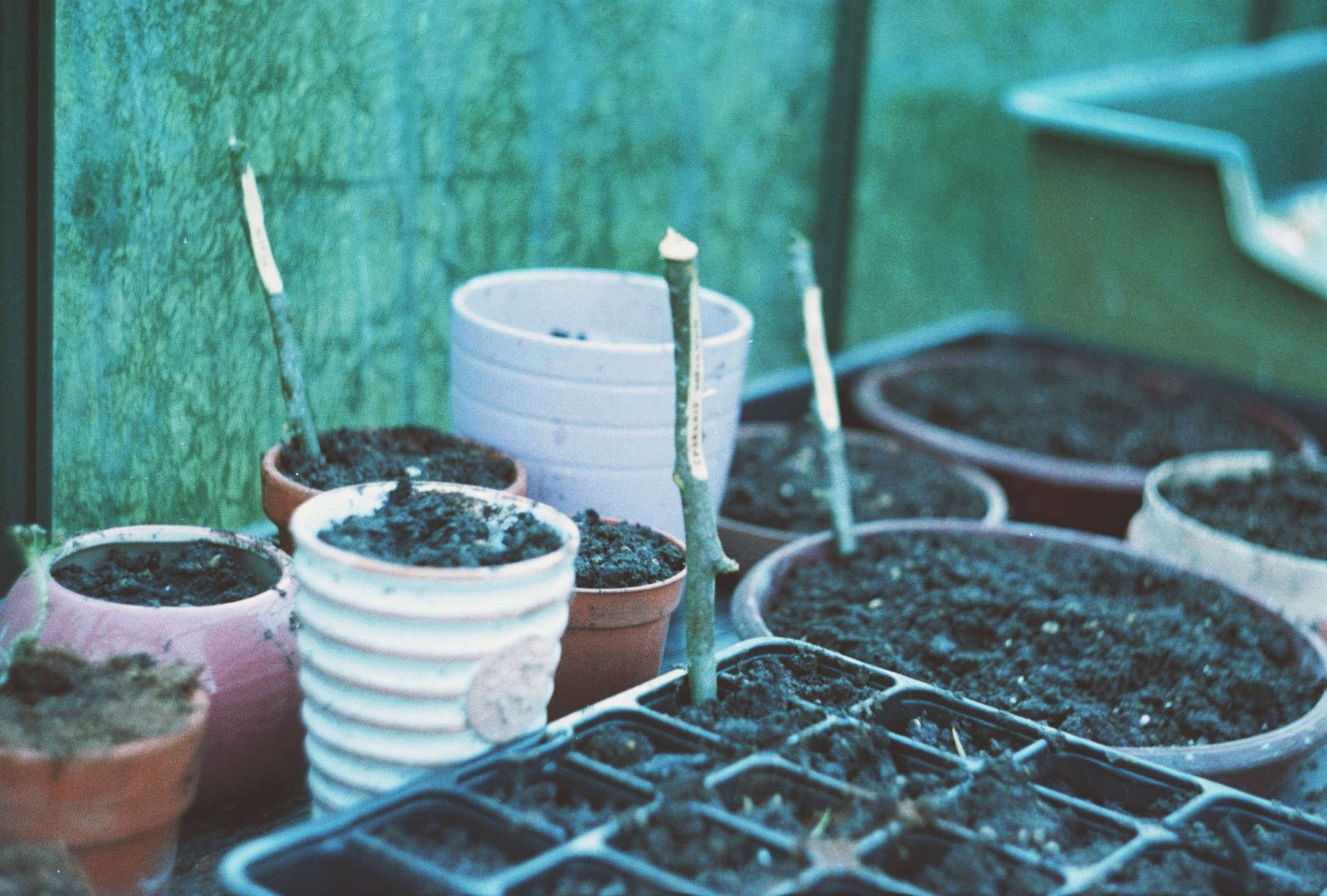 Making Plant Markers for your Garden from sticks | The Foraged Life