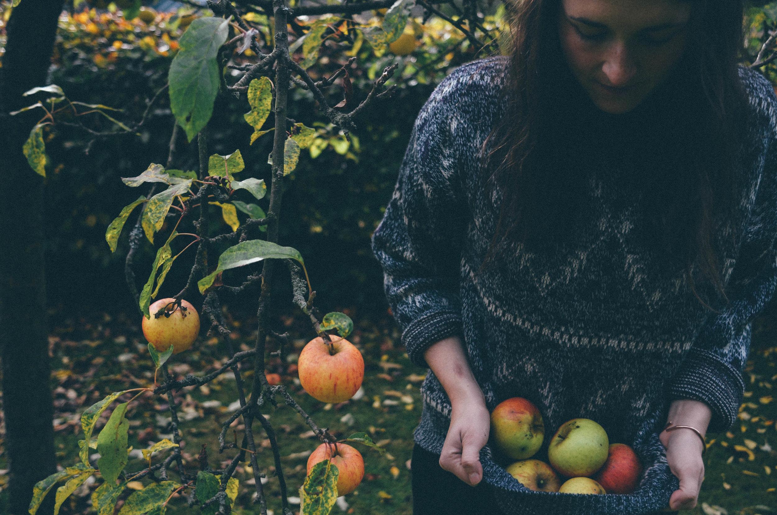 Autumn Apple Picking & Apple Cake Recipe