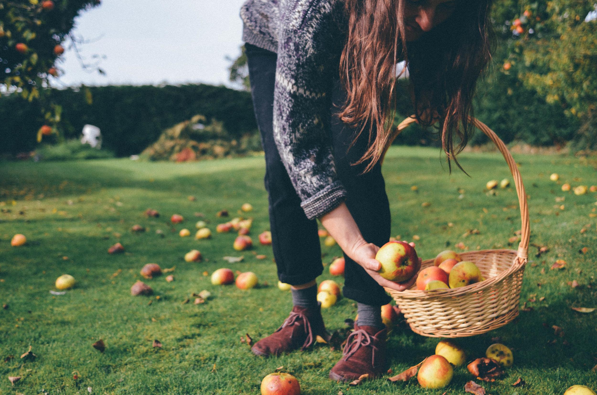 Autumn Apple Picking & Apple Cake Recipe - The Foraged Life