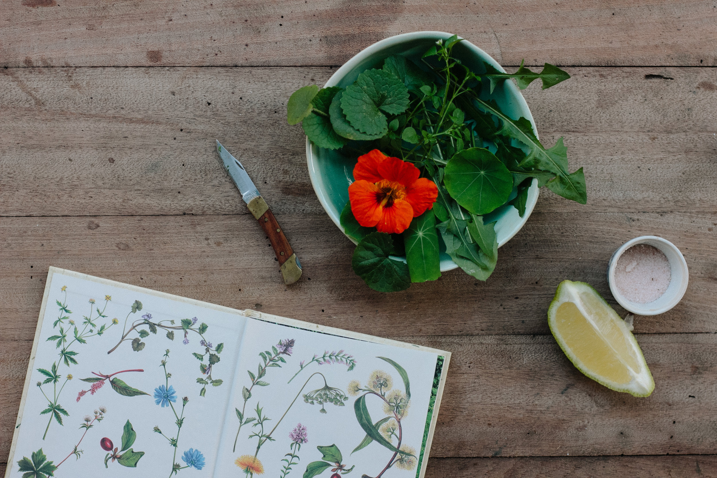 Foraged wild garden salad and herb book