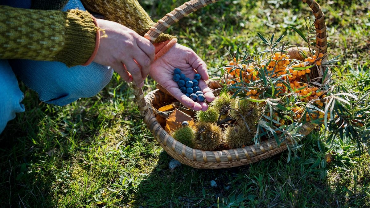 Foraging with Wildfood UK | The best experiences you can buy your loved ones this Christmas & why this is better for the planet | Eco-friendly living by The Foraged Life
