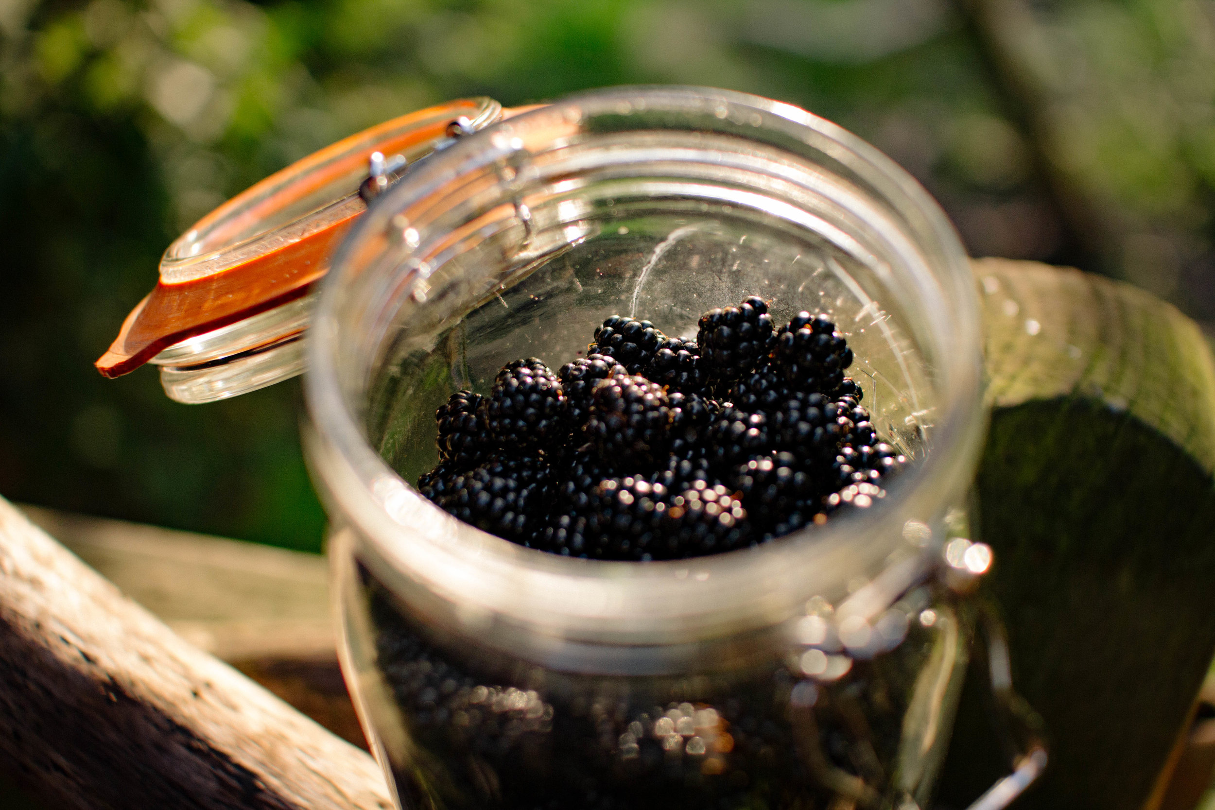 Blackberry foraging + the best recipes for them