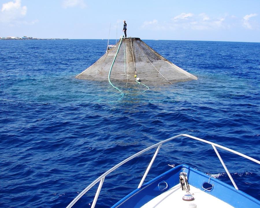 noaa-aquaculture1.jpg