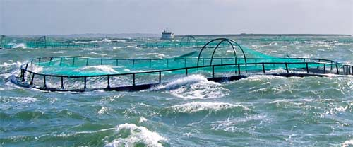 hvalpsund-net_fish-farming-solutions_weather-resistant_r.jpg