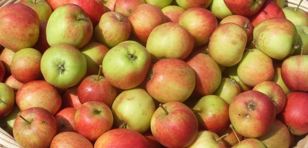 Apple Day 2018