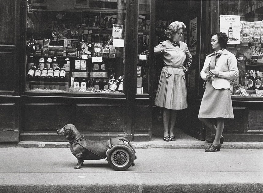 "Robert Doisneau, ""Dog on Wheels,""Paris 1977"