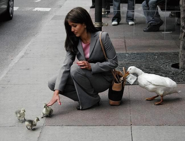 Duck pickpocket… what's the story here?