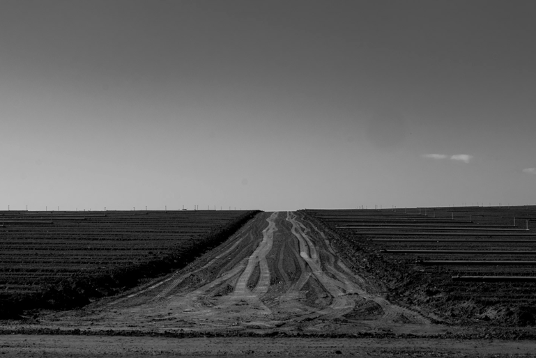 Rubin (Farm, 2017) And an utterly quiet landscape, with horizon.