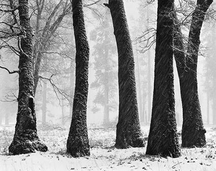 008_Trees_Blowing_Snow_5001.jpg