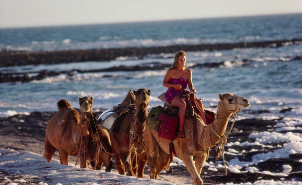 Rick Smolan (1978)  May 1, 1978: Robyn Davidson, then aged 27, with her camels on the beach in Western Australia, with the Indian Ocean behind them in the late afternoon on a perfect day when the camels got their first glimpse at the large expanse of water.