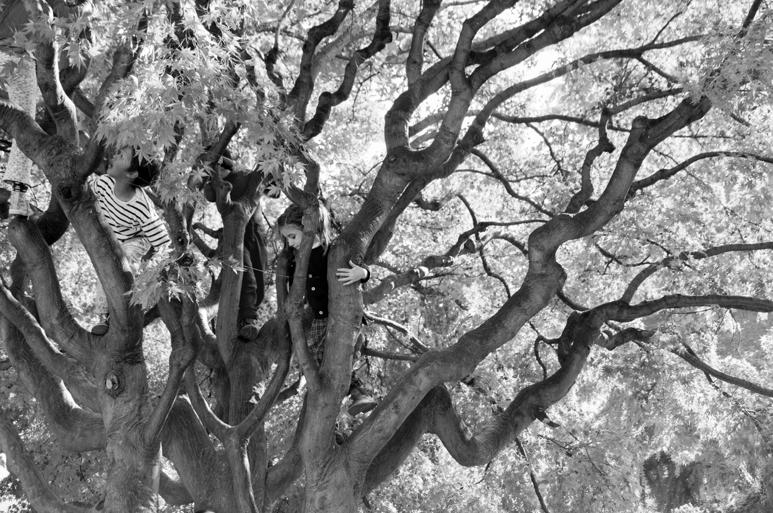 """Rubin, """"Kids in the Trees, Turin"""" (2015)"""