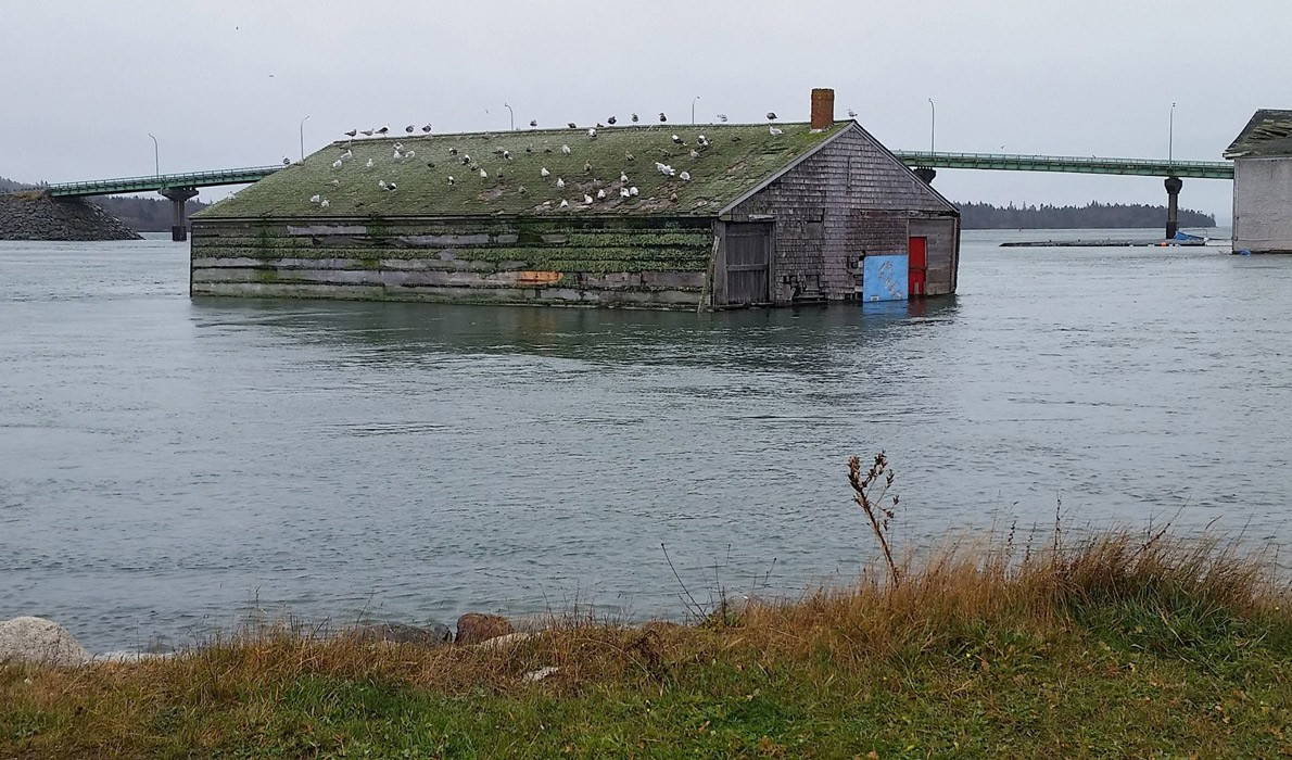 King Tide in Lubec courtesy Maine Island Institute.jpg