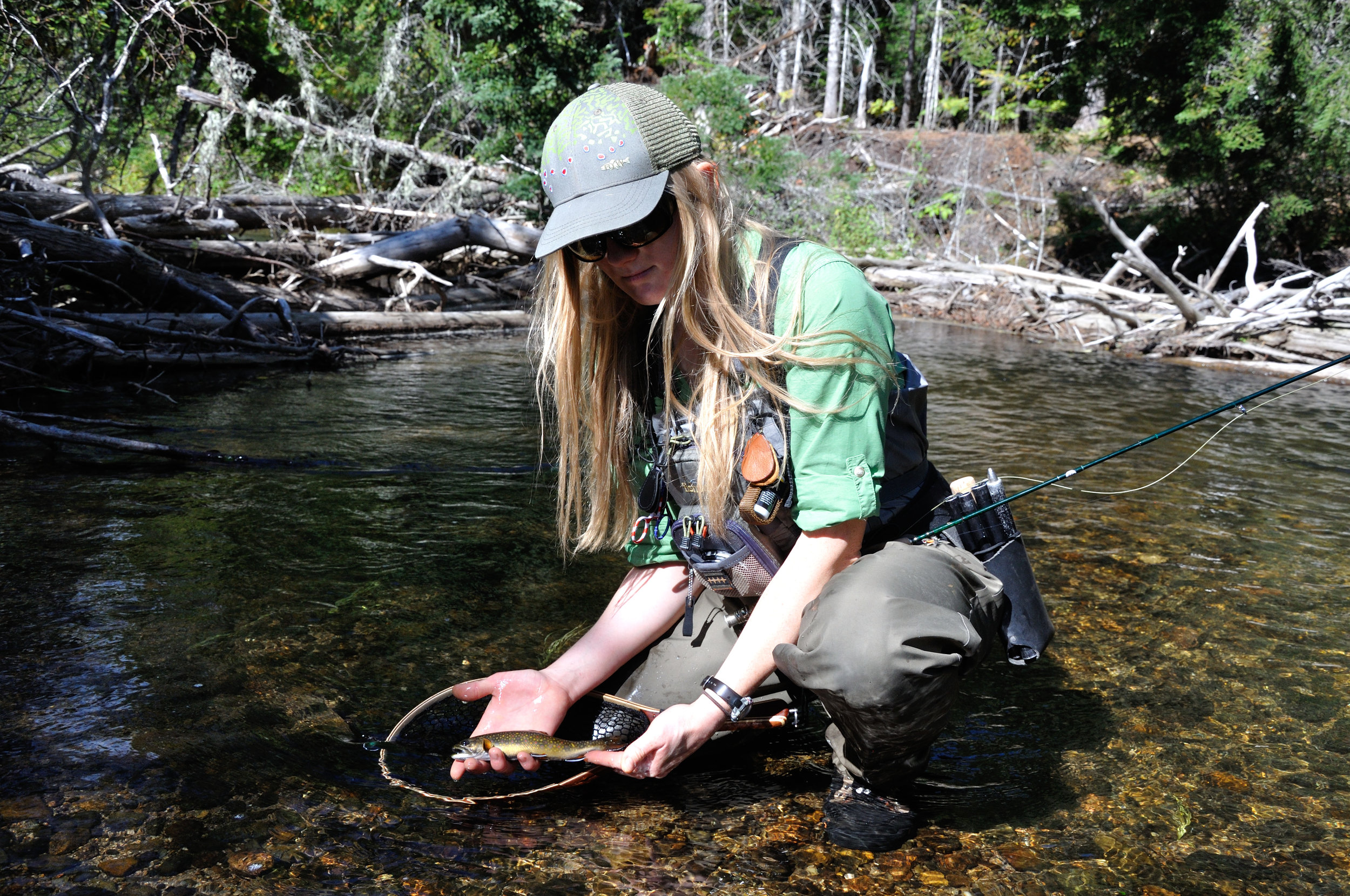 Author fishing for wild native brook trout in a headwater stream in Maine