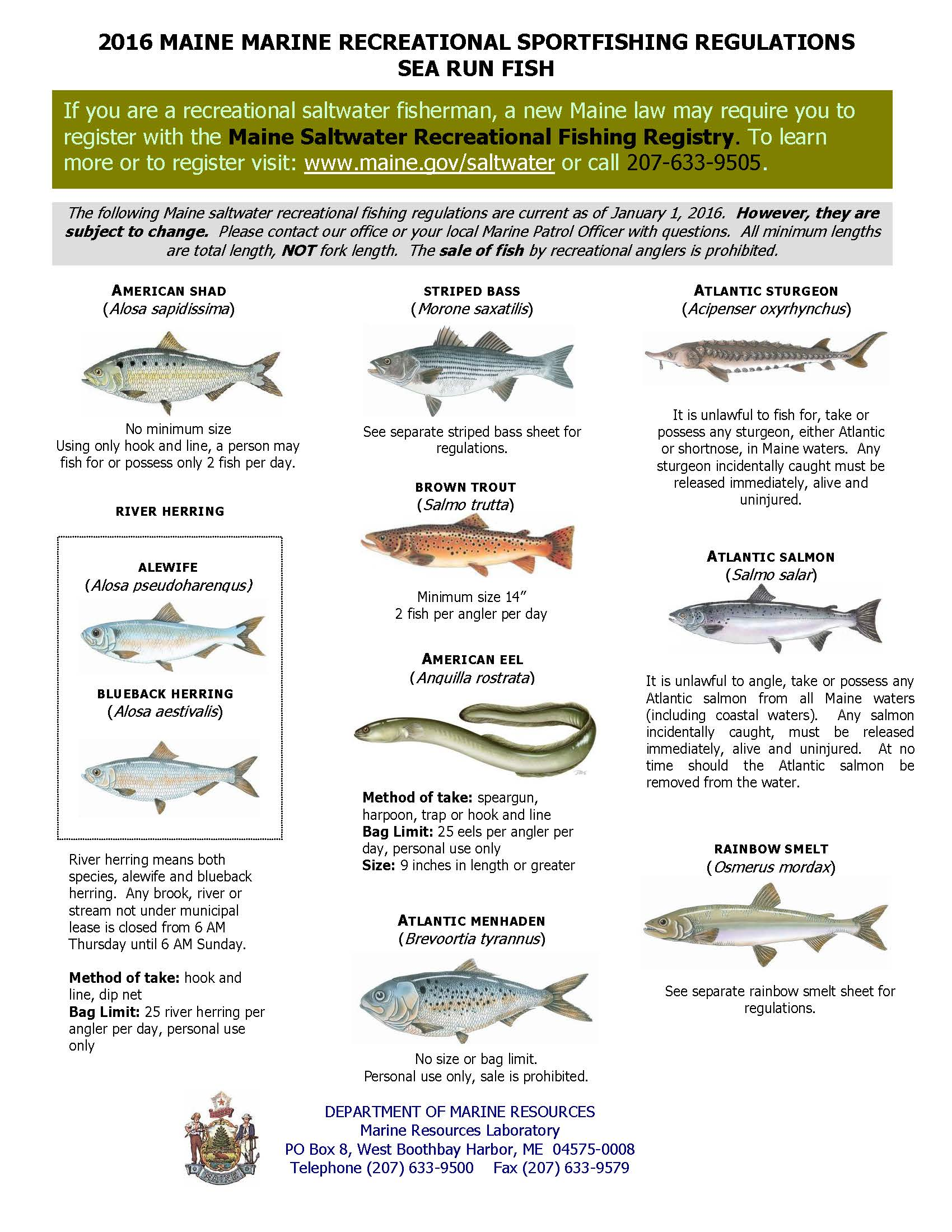 ME DMR Sea-Run Fish Rules (DMR Version).jpg