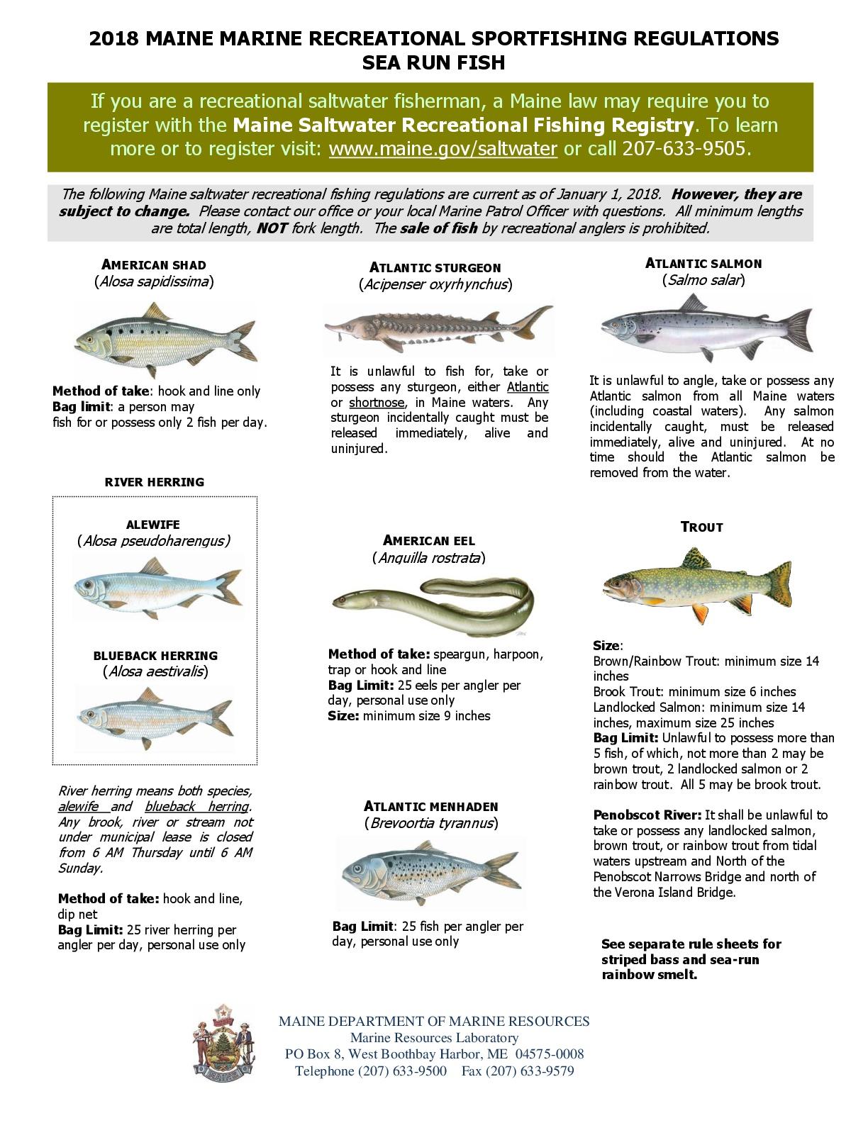 DMR Searun Sportfish Regulations 2018.jpg